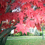 Fall Reds Art Print