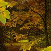 Fall Spendor - Series Number Three Art Print