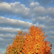 Fall Sunrise On Sugar Maple Along Route 31 Art Print
