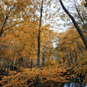 Fall Tees At  Yankee Horse Overlook   Art Print