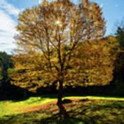Fall Tree Silhouette Kent Falls State Park Connecticut Art Print