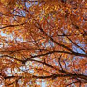 Fall Tree With Star Burst Art Print