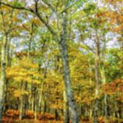 Fall Yellow Art Print