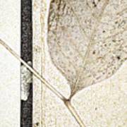 Fallen Leaf Two Of Two Art Print