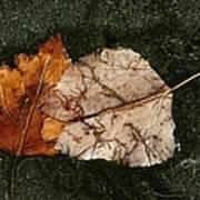 Fallen Leaves On Frozen Water Art Print