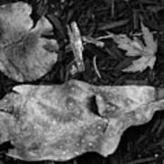Fallen Leaves Revisited Art Print