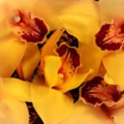 Fallen Orchids Art Print