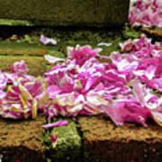 Fallen Petals Art Print