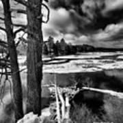Fallen Trees In The Moose River Art Print