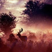Fallow Deer In Fairytale World Art Print