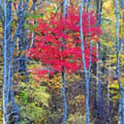 Fall's Flame Art Print