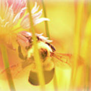 Fame Is A Bee Art Print