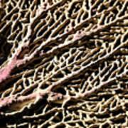 Fan Coral Art Print