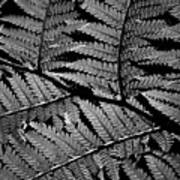 Fan Of Fronds Art Print