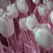 Fanciful Tulips In Pink Art Print