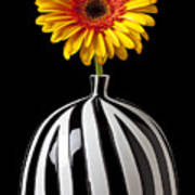 Fancy Daisy In Stripped Vase  Art Print