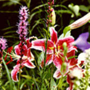 Fancy Lilies In Garden Art Print