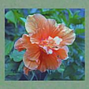 Fancy Peach Hibiscus Art Print
