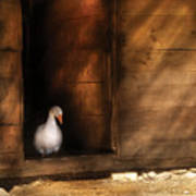 Farm - Duck - Welcome To My Home  Art Print