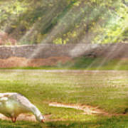 Farm - Geese -  Birds Of A Feather - Panorama Print by Mike Savad