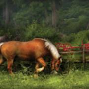 Farm - Horse - In The Meadow Art Print
