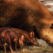 Farm - Pig - Family Bonds Art Print