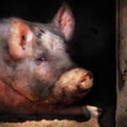 Farm - Pig - Piggy Number Two Art Print