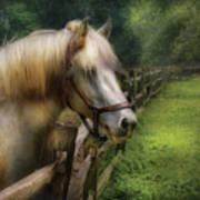 Farm - Horse - White Stallion Art Print