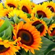 Farm Stand Sunflowers #8 Art Print