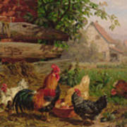 Farmyard Chickens Art Print