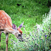 Fawn Visits Flowers Art Print
