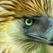 Fearless Philippine Eagle Art Print