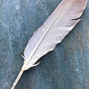 Feather Of A Dove Art Print