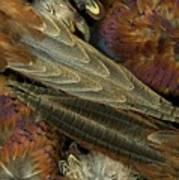 Featherdance Art Print