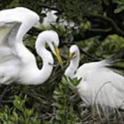 Feathering Their Nest Art Print