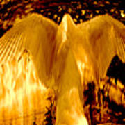Feathers Of Light - Gold Art Print