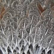 Feathers Of The Wild Hen Art Print