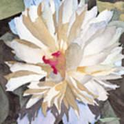 Feathery Flower Art Print by Ken Powers