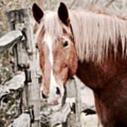February Horse Portrait Art Print