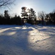 February Pine Tree Shadows Art Print