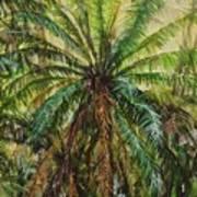 Federico Palm Art Print