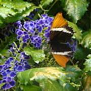 Feeding Butterfly Art Print