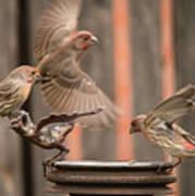 Feeding Finches Art Print