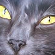 Feline Face 1 Art Print