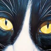 Feline Face 2 Art Print