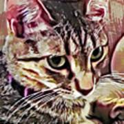Feline Fancy Art Print