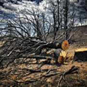 Felled After The Wildfire Art Print