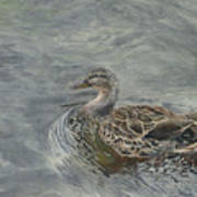 Female Duck Art Print