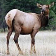 Feme Elk Art Print