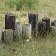 Fence Post All In A Row Art Print